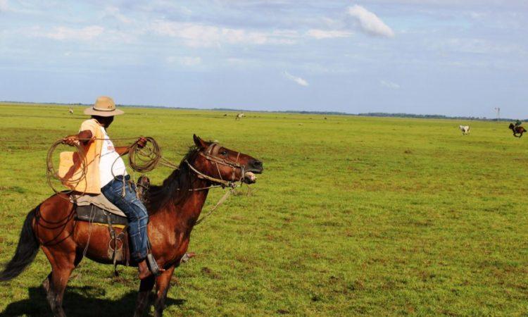 Photo of 18 cosas que hacen que el Llano sea lindo, grande y líder en el futuro de Colombia