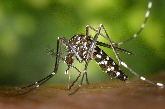 Photo of Investigan dos muertes por posibles casos de dengue en Villanueva