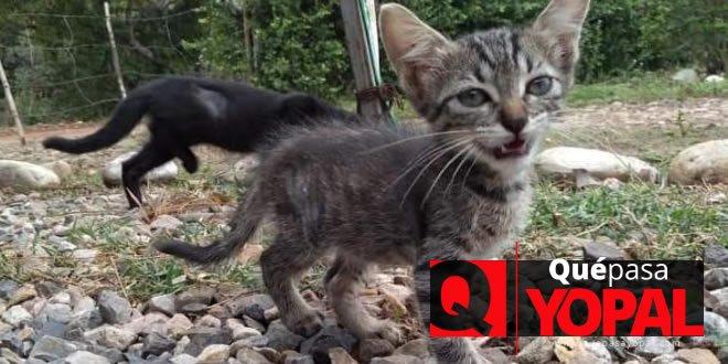 Photo of Albergue de animales tiene felinos y caninos disponibles para dar en adopción
