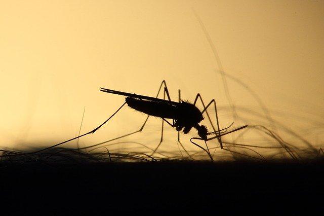 Photo of Casos de dengue descienden en Yopal