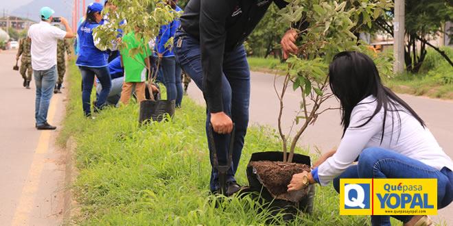 Photo of En Villa David sembrarán árboles Flor Amarillo en conmemoración del Día Mundial del Medio Ambiente