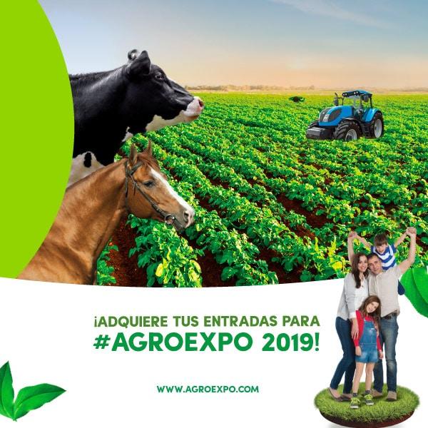 Photo of 13 empresas representarán a Casanare en Agroexpo 2019