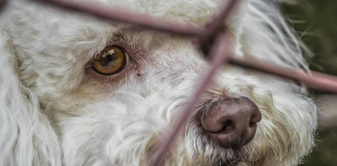 Photo of Realizarán obras de mejoramiento del albergue de animales en Yopal