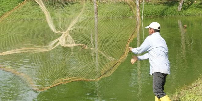 Photo of 21 familias logran producir pescado en Sabanalarga