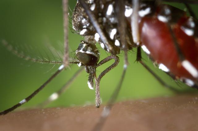 Photo of Advierten sobre incremento en casos de dengue en Casanare