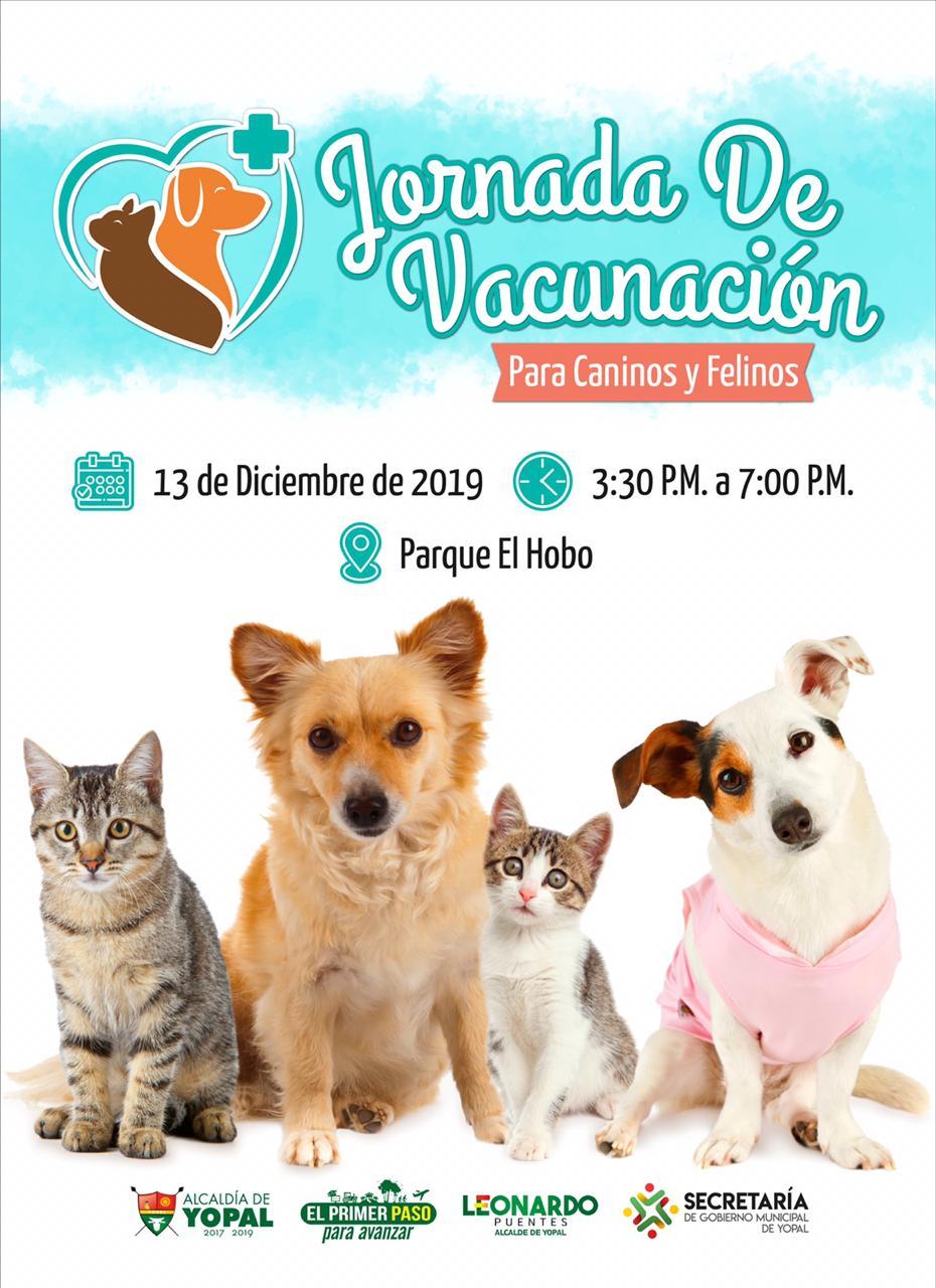 Photo of Jornada de vacunación para mascotas este viernes en el barrio Los Helechos