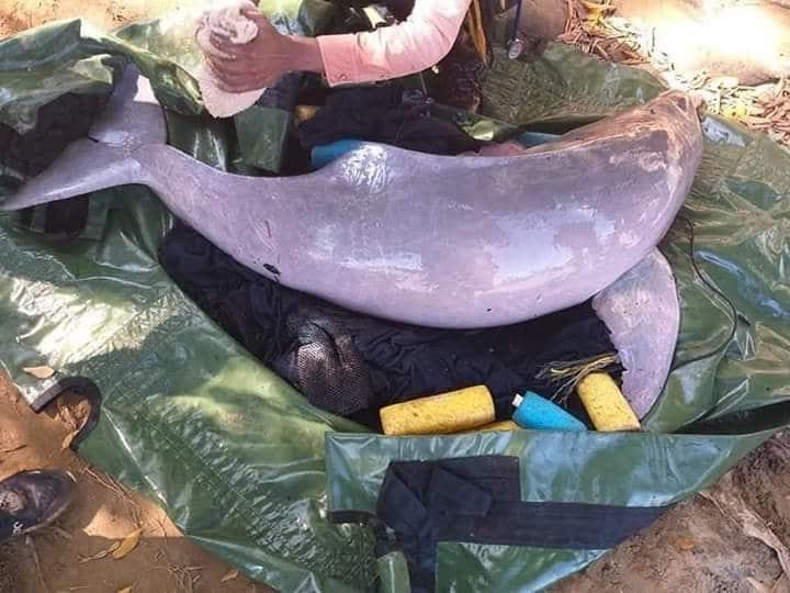 Photo of Dos toninas fueron liberadas en el río Arauca