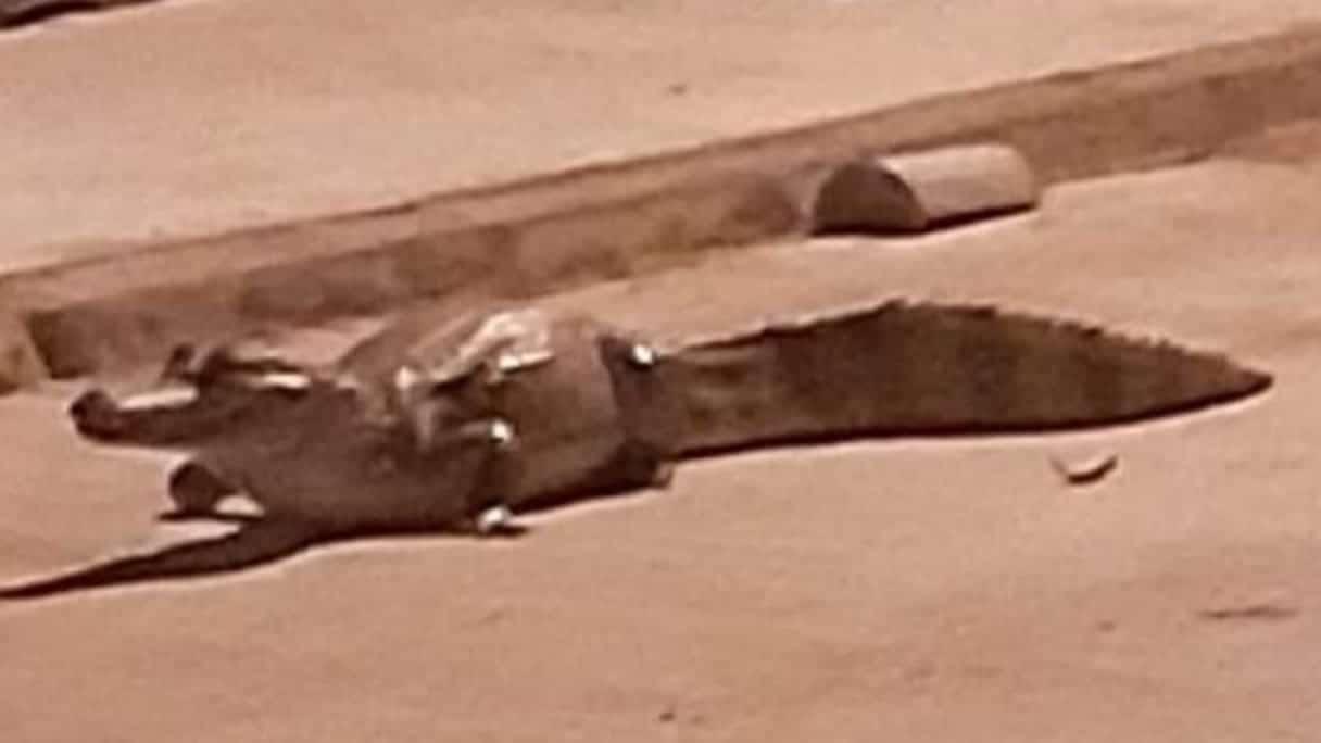 Photo of Los animales silvestres se toman las calles de los municipios de Casanare