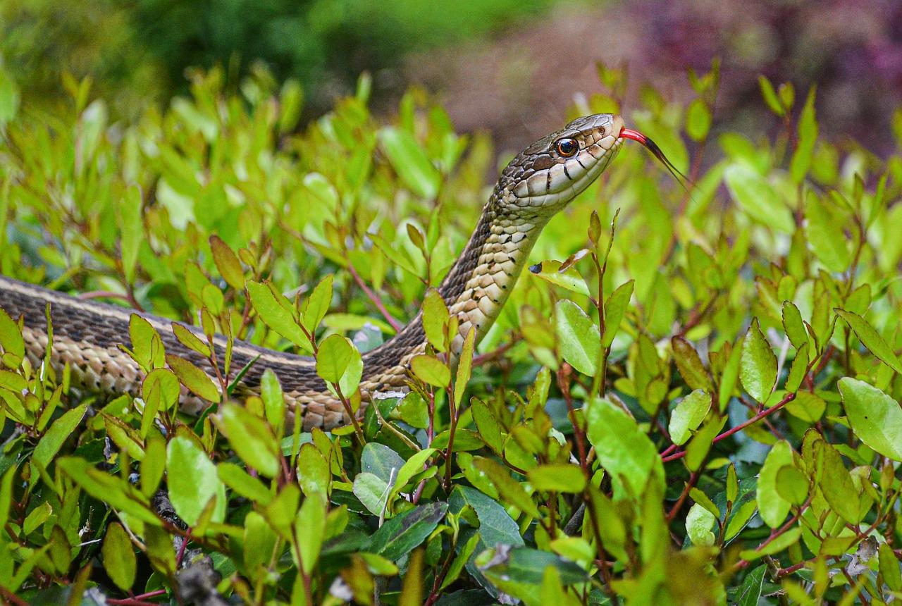 Photo of Advierten sobre aumento de serpientes en temporada de lluvias