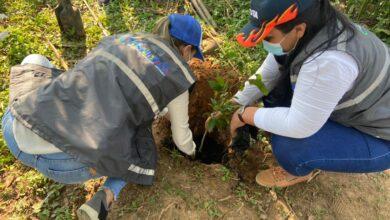 Photo of Con «Sembratón» la Gobernación de Casanare conmemoró el Día Internacional de la Tierra