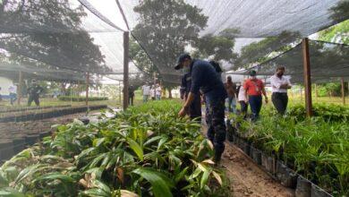 Photo of Mega vivero de Puerto López, el principal semillero de plántulas en el Meta