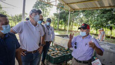 Photo of Más de $1700 millones para planta transformadora de piña en Tauramena