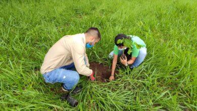 Photo of Más de 479 mil árboles ha sembrado Cormacarena en lo corrido del 2021